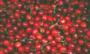 CHERRIES TART SWEETENED BULK 10 LBS