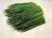 SPROUTS WHEATGRASS OG BULK P 1 TRAY/10x20