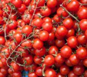 TOMATOES CHERRY OG BULK P 12 PINT